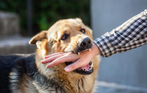 dog bites more frequent in the summer